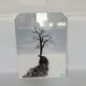 tranh-in-ban-thu-cong-tree